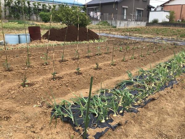 野菜の苗付け①.jpg